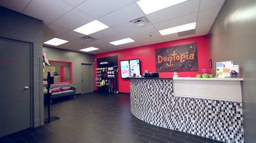 Dogtopia Investment Daycare Design Pet Businesses Grooming Salon