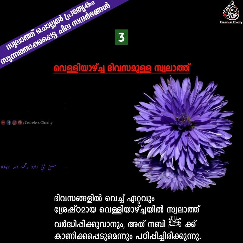 Pin By Ceaseless Charity On Swalath In 2020 Malayalam Quotes Duaa Islam Quotes