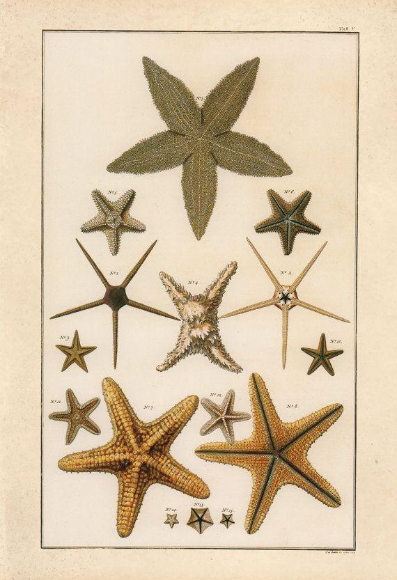 Starfish History Diagram Wiring Diagram Services