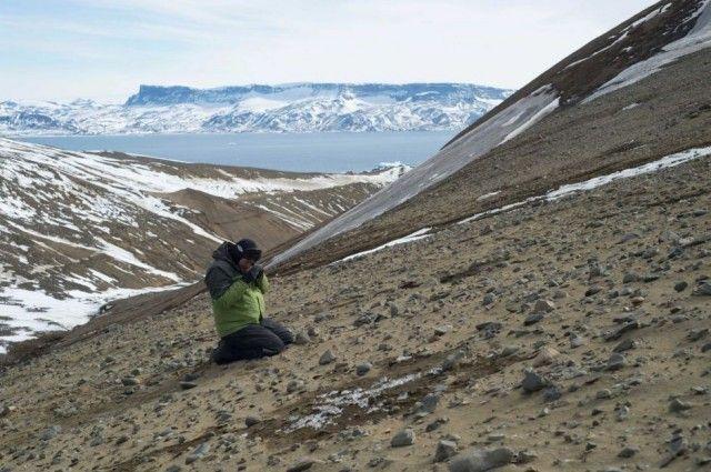 Treasure Trove Of Dinosaur Fossils Found In Antarctica ...
