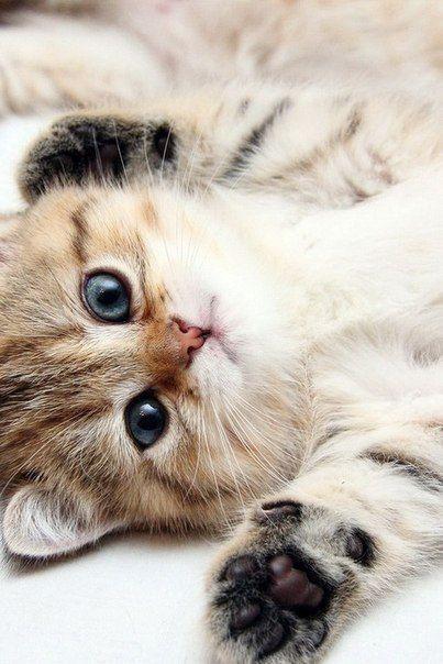 Hugs Kitty Cats