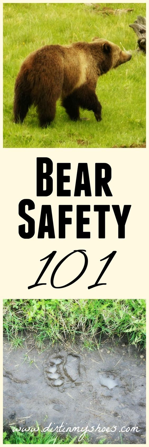 Photo of Bear Safety 101 – Preventing an Encounter