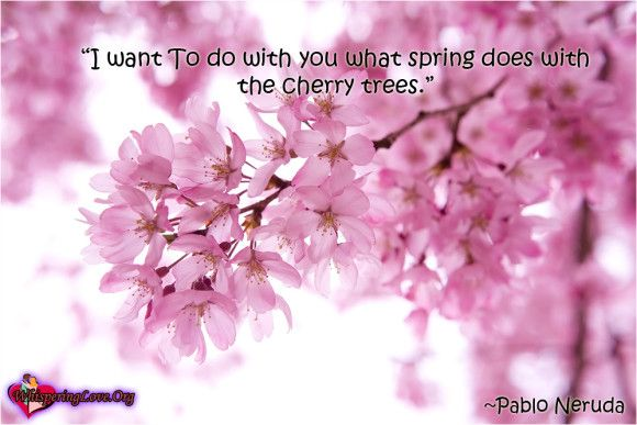 I Want To Do With You What Spring Does With The Cherry Trees Pablo Neruda Japanese Cherry Tree Cherry Blossom Tree Cherry Images