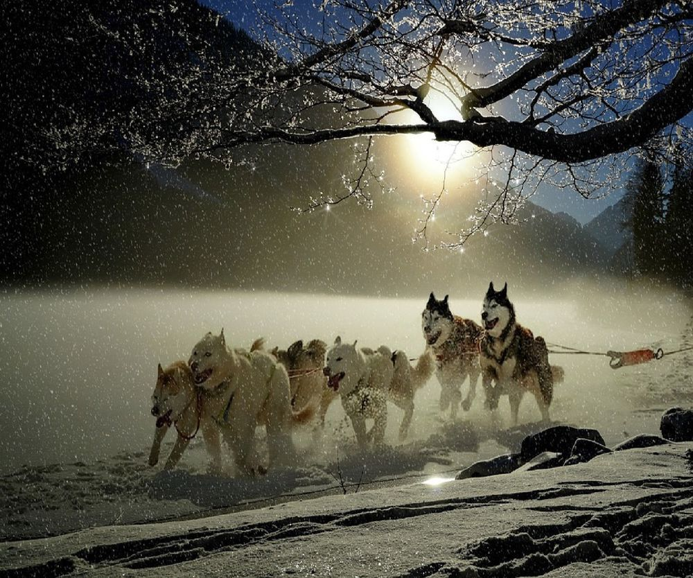 Details About Husky Sled Dogs Computer Mouse Pad 9 X 7 Alaskan