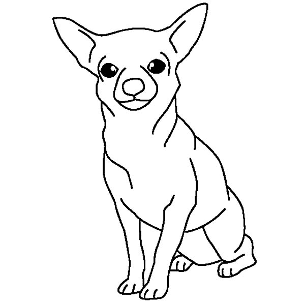 Chihuahua Dog Posing Coloring Pages Netart Dog Coloring Page Puppy Coloring Pages Animal Coloring Pages
