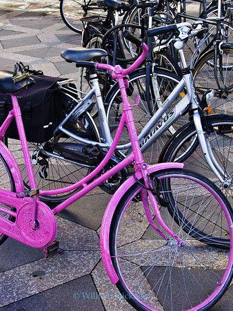 Denmark Copenhagen commuter bicycles