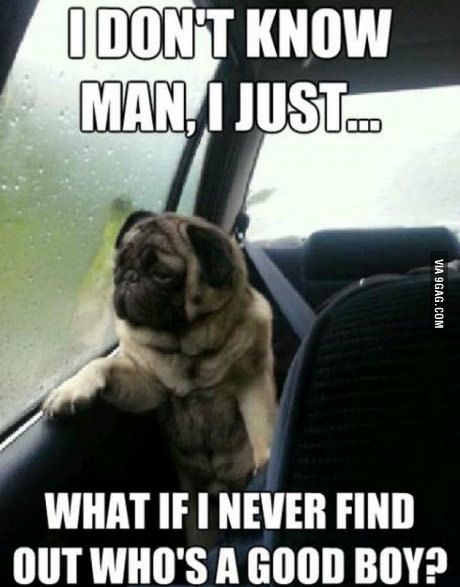 Morning Pug In Coffee Cup Good Morning Picture Funny Good Morning Quotes Morning Pictures