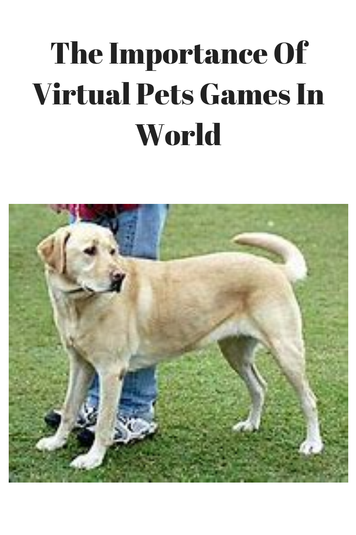 The Importance Of Virtual Pets Games In World Pets Care Ideas Dog Walking Business Dog Walking Dog Walking Services