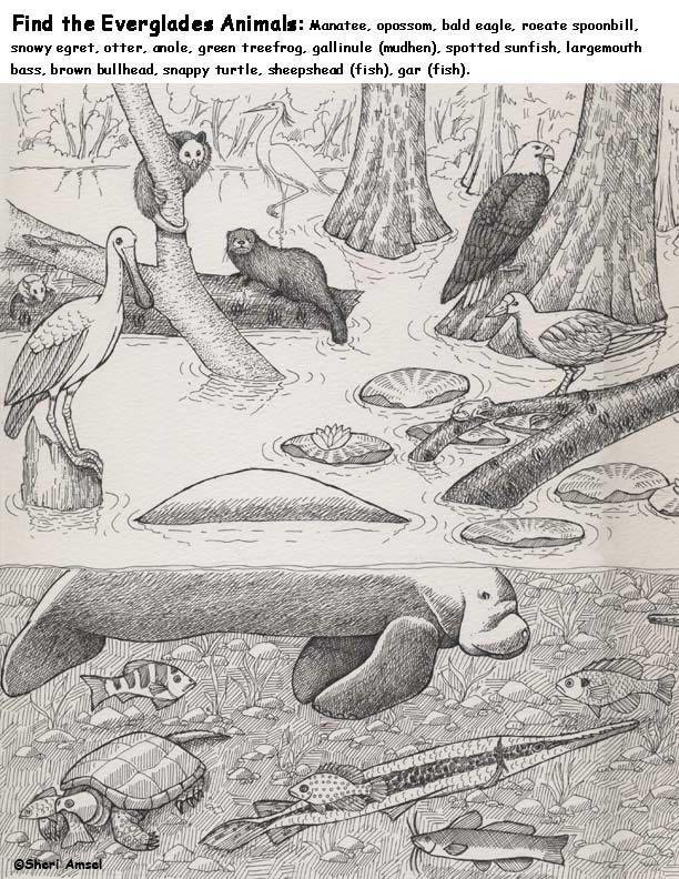 Animals Of The Everglades