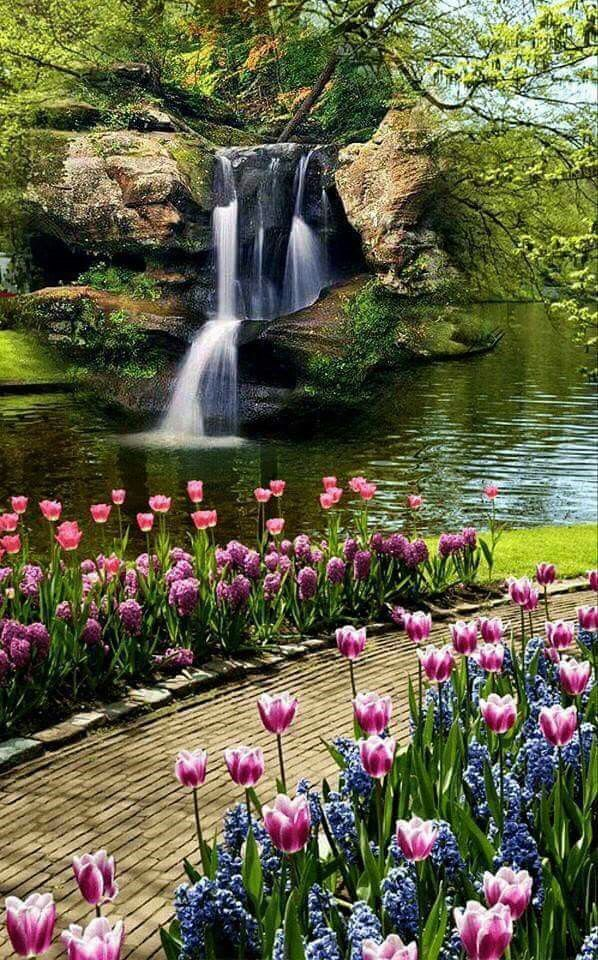Tulips And Hyacinths Line A Path Aside A Dramatic Waterfalls Beautiful Gardens Spring Garden Beautiful Landscapes