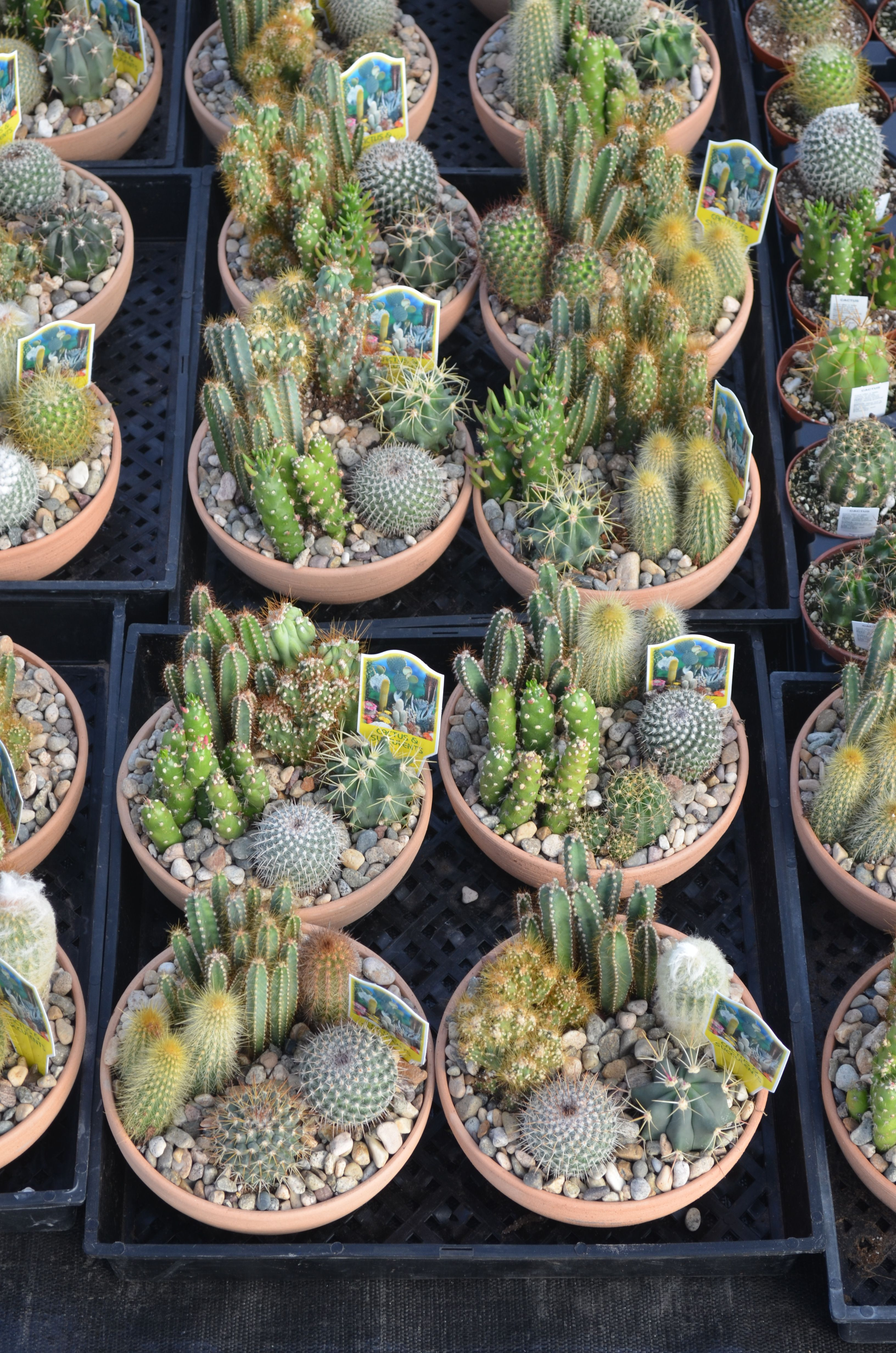 Cactus Bowls Found At Walla Nursery Co