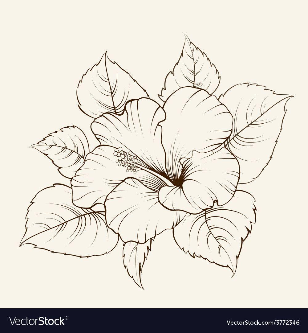 Flower Of Mallow Vector Image On Con Imagenes Bocetos De