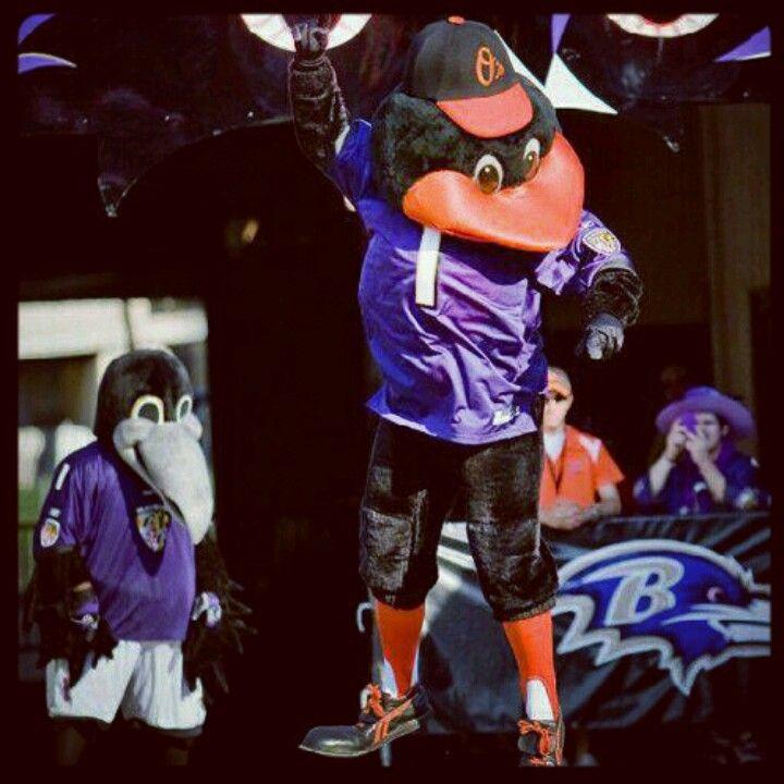 Orioles & Ravens