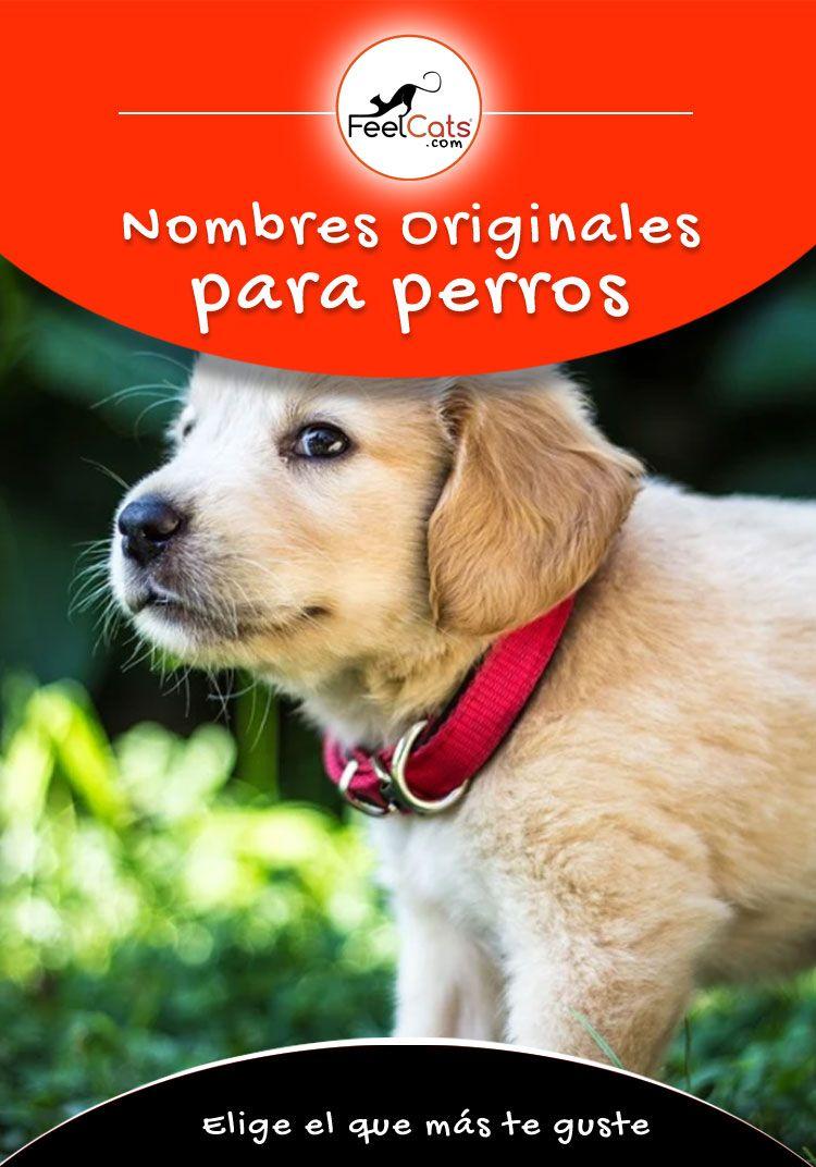 Nombres Para Perros Top 100 Más Bonitos Y Originales Nombres Para Perros Machos Nombres De Perros Nombres De Perro Hembra