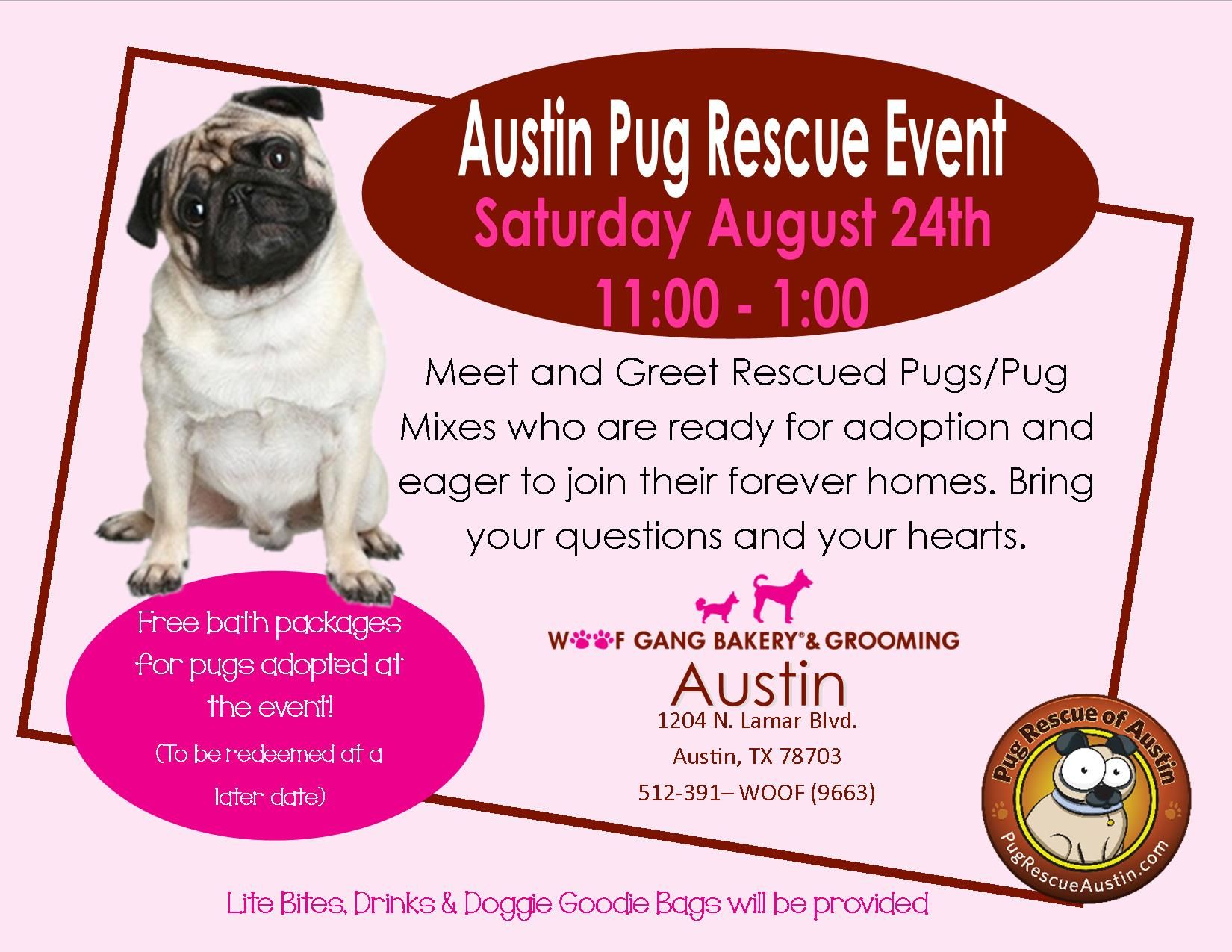 Adopt Squirrel On Pet Adoption Squirrel Pug Rescue