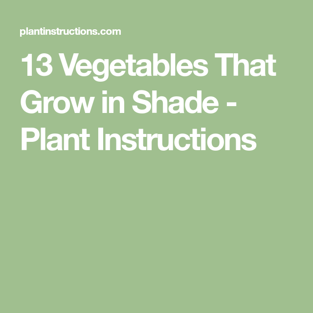 House Plants For Shady Rooms: 13 Vegetables That Grow In Shade