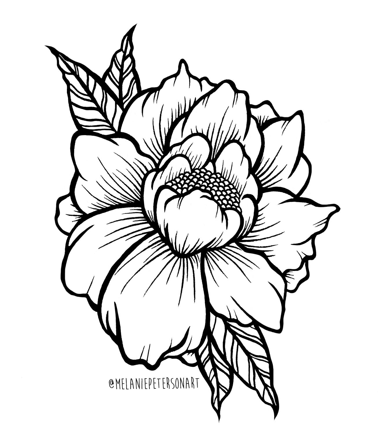 Peony Illustration Done Using Copic And Micron Pens Flower Art Nature Drawing Illustration Blackw Peony Illustration Micron Pen Art Flower Line Drawings