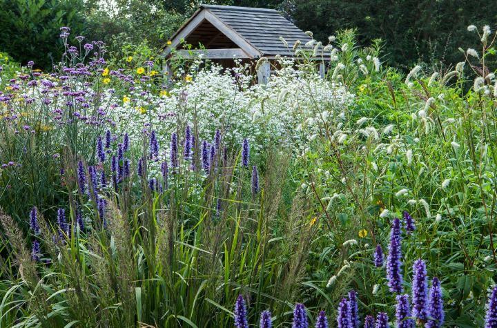 item23   Garden, Grasses garden, Perennial plants