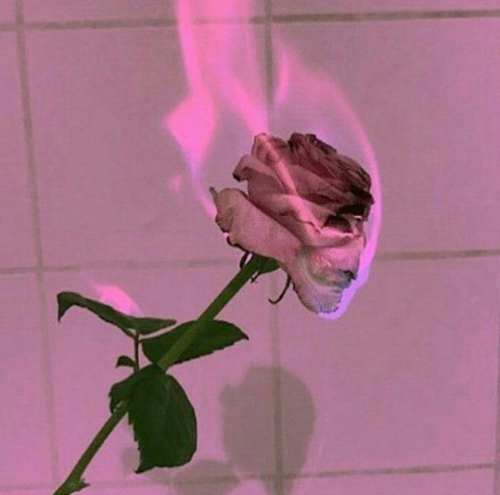 Cute Rose Wallpaper For Computer Desktop Pin By Nathan Schielke On Aesthetic Vapor Wave Pinterest