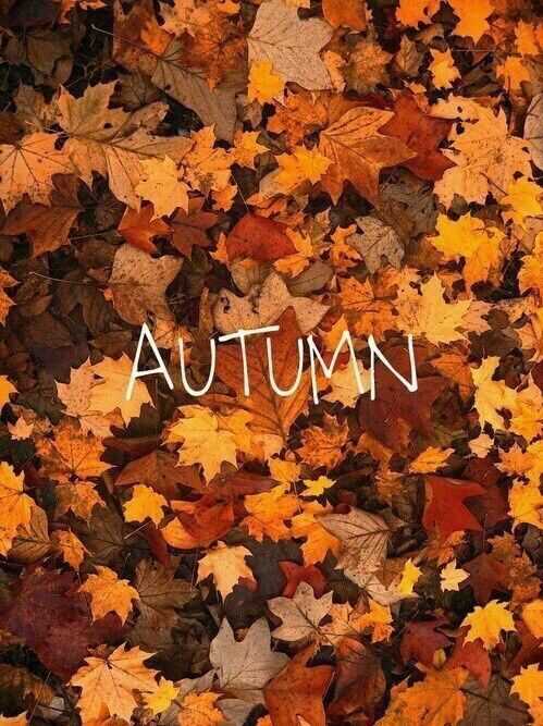 Autumn #helloautumn