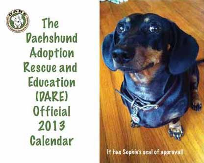 Dare Works Hard To Rescue As Many Dachshunds As Possible In Fl And