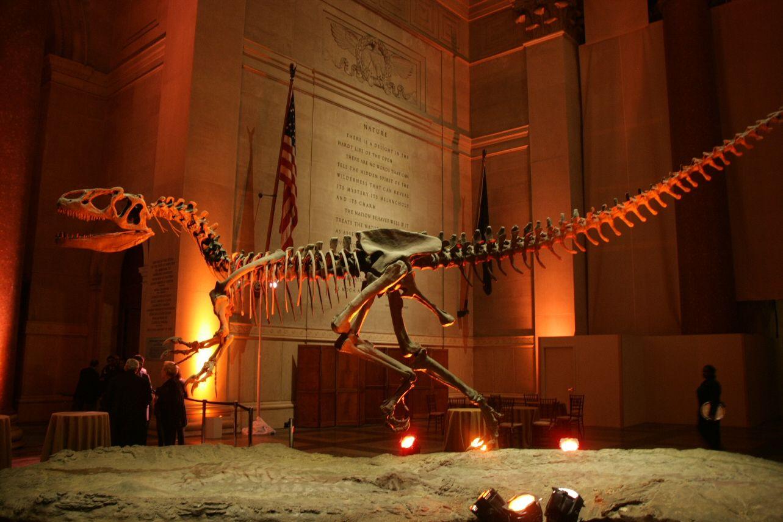 Squelette monté en fonte d'Allosaurus. AMNH