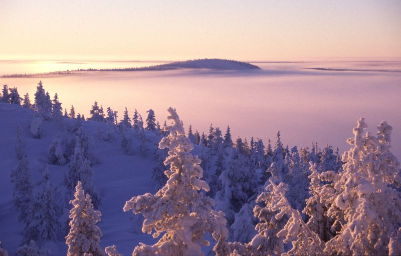 Winter mist in Ruka, Finnish Lapland