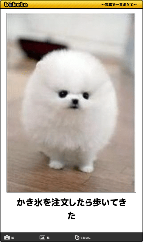 爆笑 このセンスが欲しかった 予想を裏切ってくるイヌ画像でボケて27選 まぬるねこ 犬のジョーク 可愛い 動物