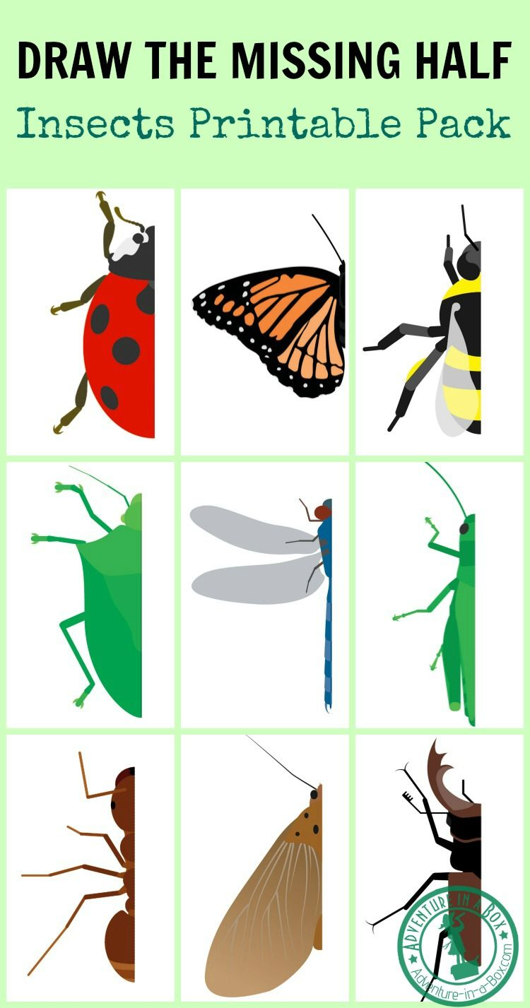 Draw The Missing Half Insects Insect Crafts Insect Activities Art For Kids