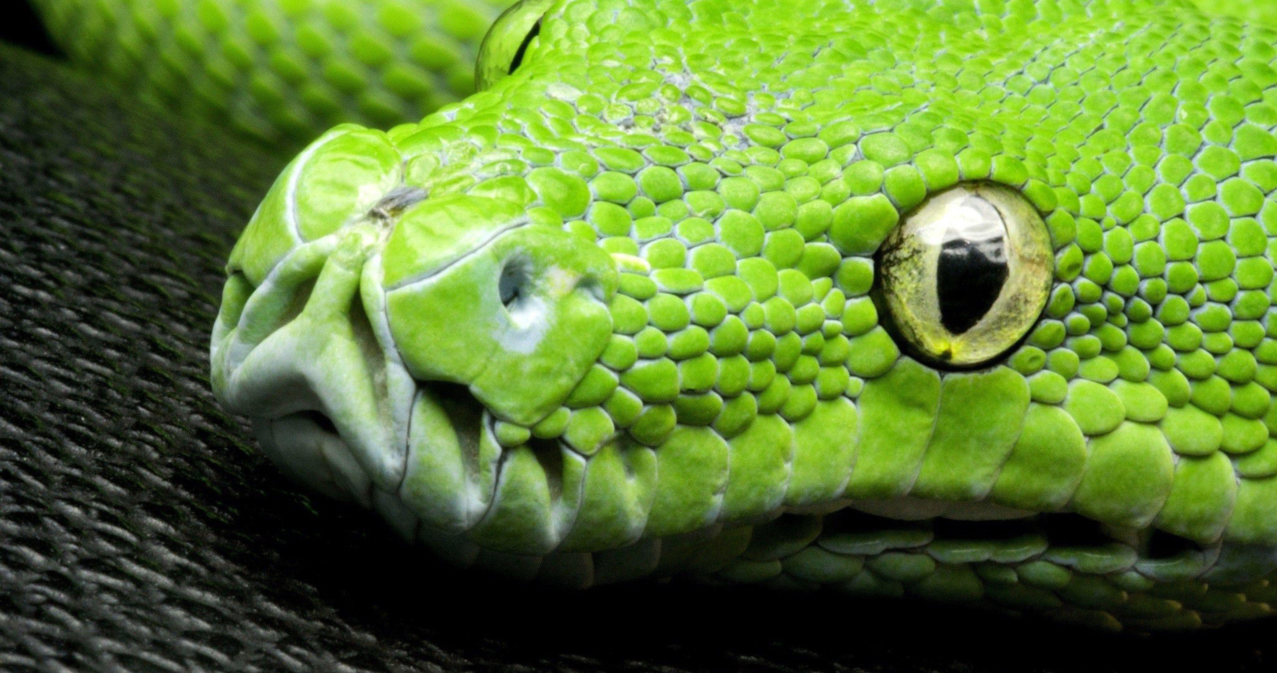 Green snake 4k ultra hd wallpaper ololoshenka pinterest - Green snake hd wallpaper ...