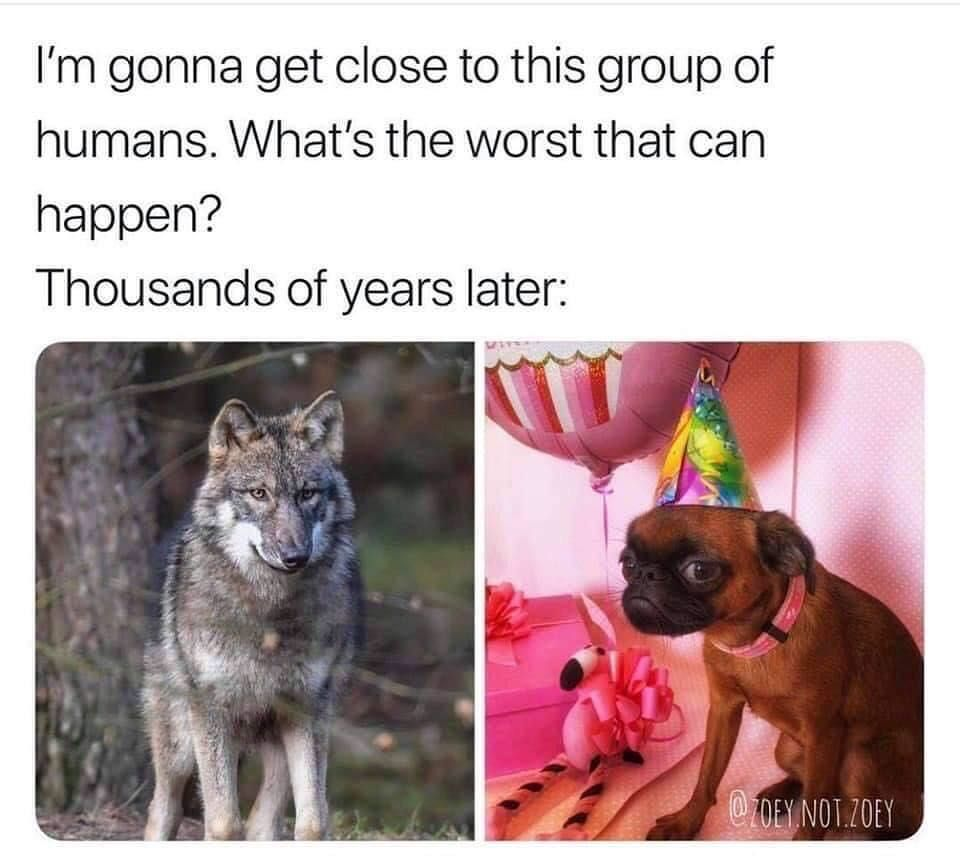 Pin By Santiago Cejas On Funny Funny Animal Memes Funny Memes Humor