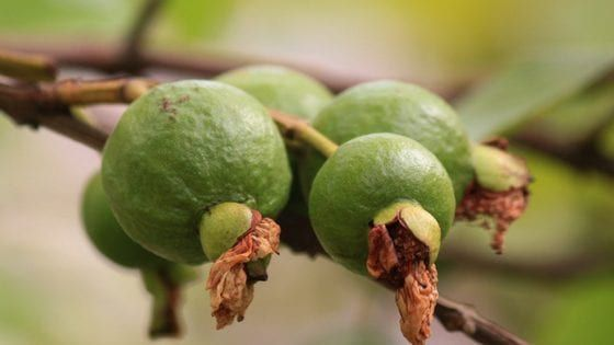 Crazy Costa Rica Fruits That You Need to Try