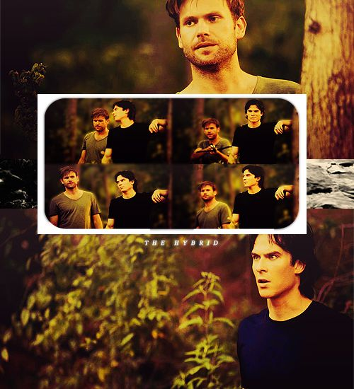 Damon and Alaric The Hybrid