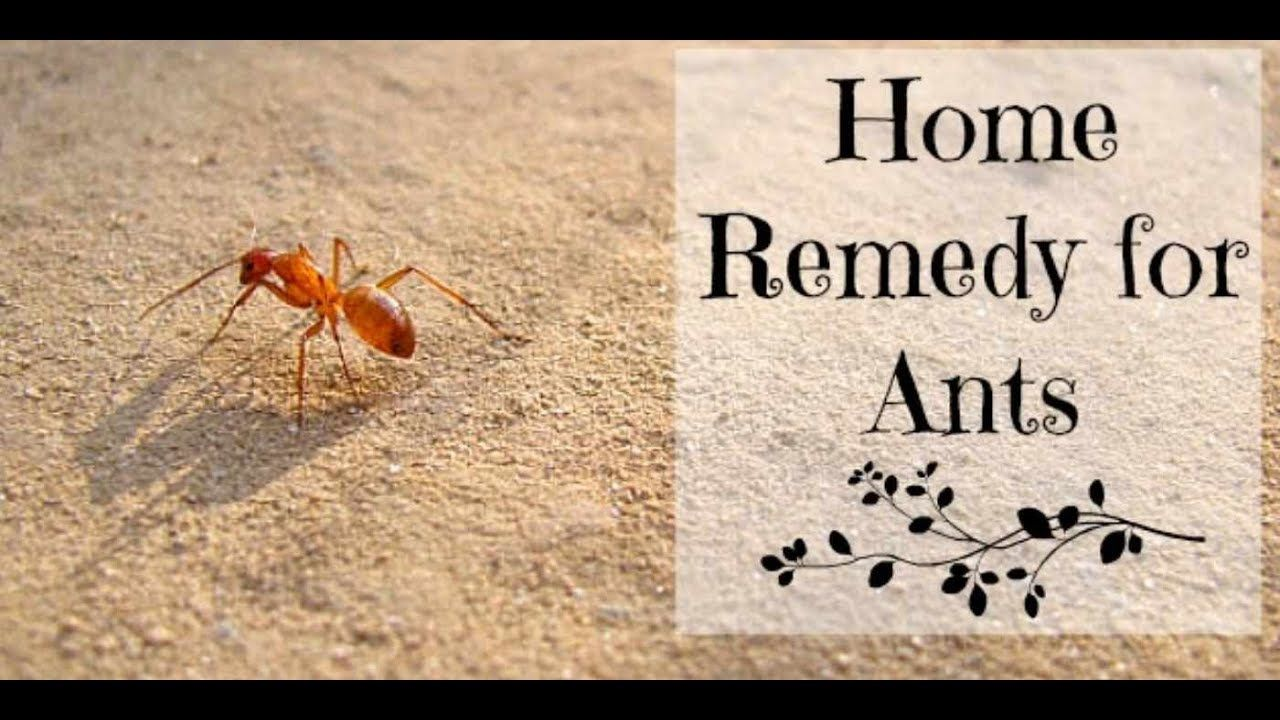 ants Home House Natural Remedies Remedy Rid Check