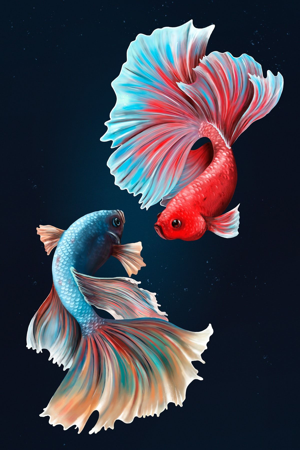 Download premium illustration of Betta fishes on a midnight blue