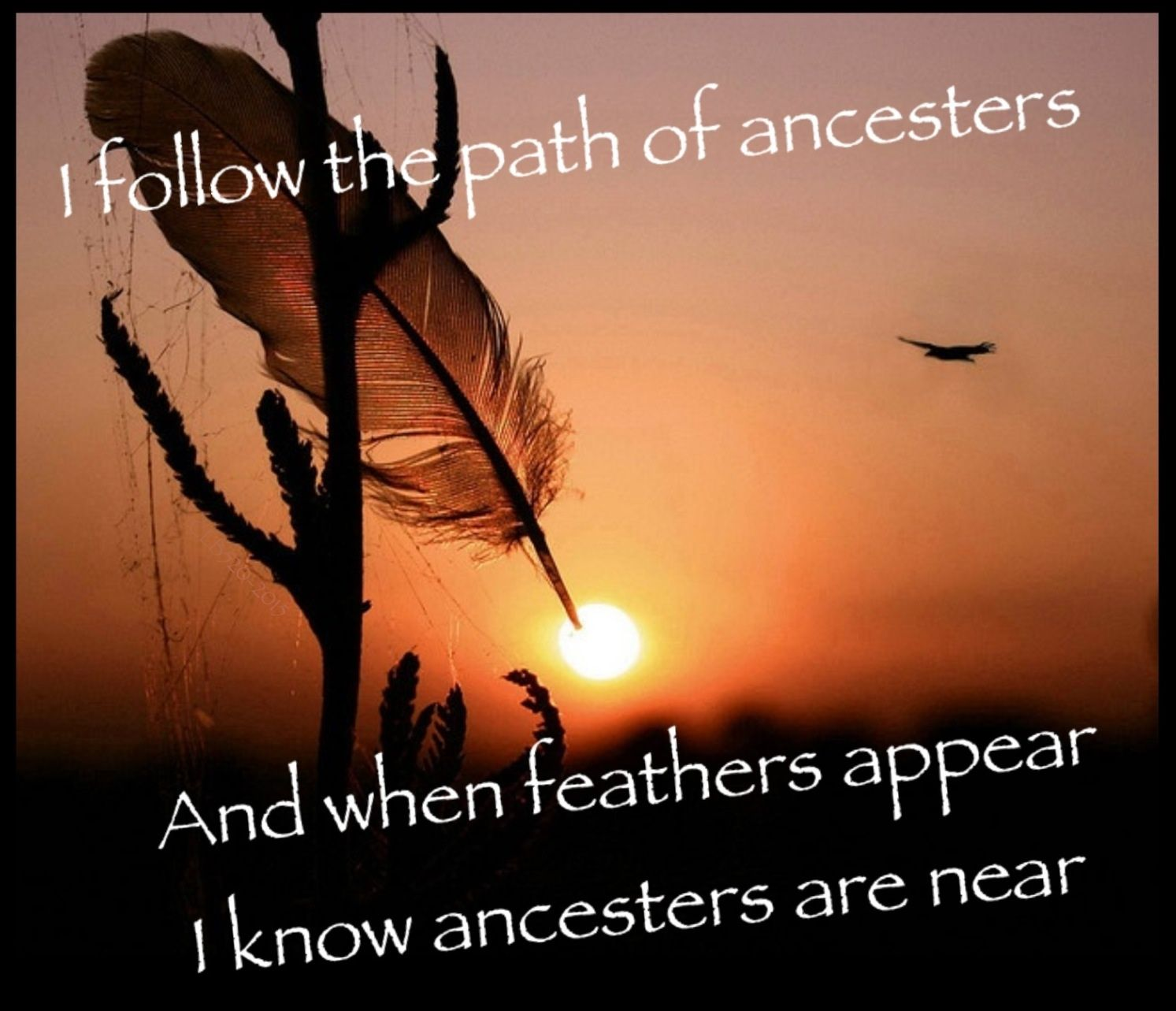 Native ancesters native american indians pinterest native
