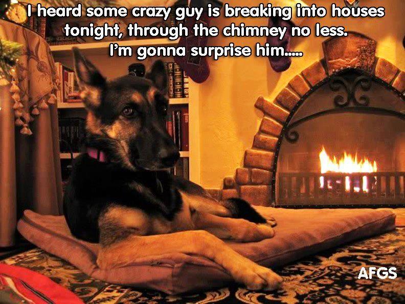 Surprise Santa Source Facebook German Shepherd Funny Cute Animal Quotes German Shepherd Memes