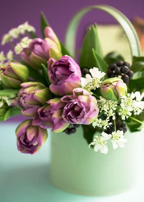 Good morning tulips flower green Purple Flowers