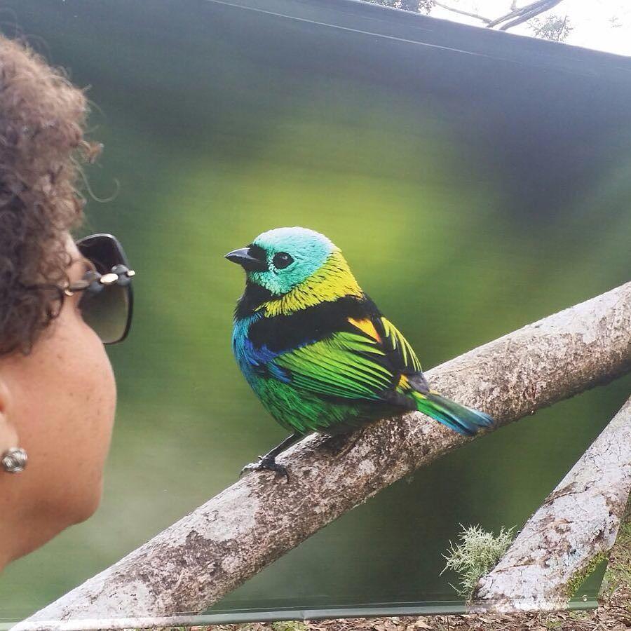 Bom dia segunda sua linda! Ótima semana a tod@s!! #bomdia #goodmorning #segunda #boasemana #semanalinda #muitoamor #natureza #instaphoto #birds
