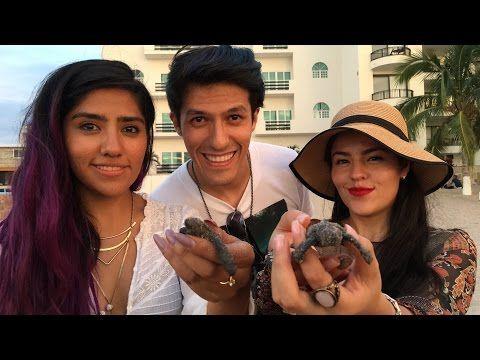 Liberando tortugas EN VIVO!! LOS POLINESIOS - YouTube