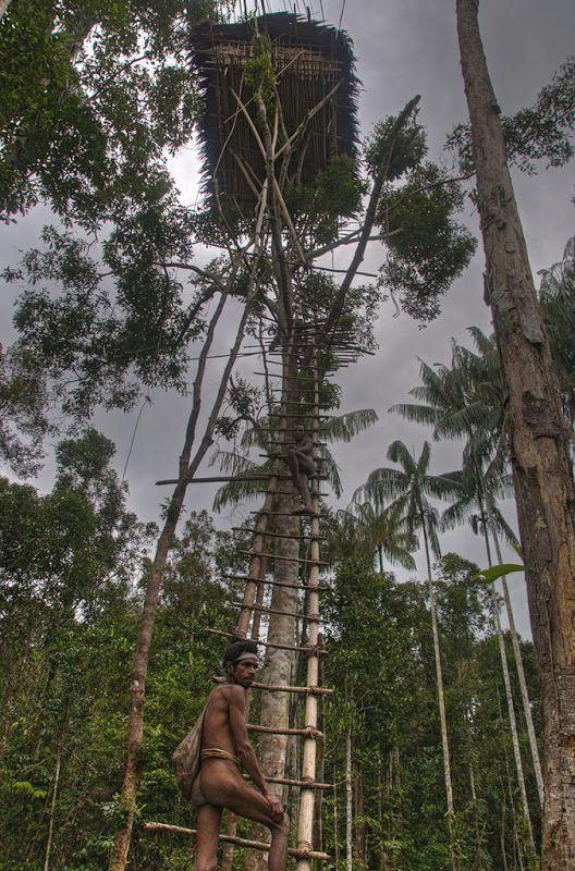 jungle high rise