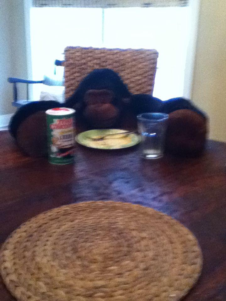 Ava the gorilla