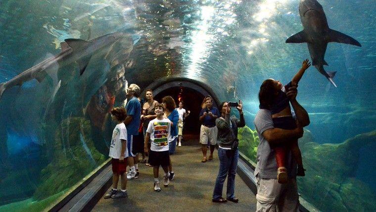 The Adventure Aquarium   Camden, NJ   Travel usa