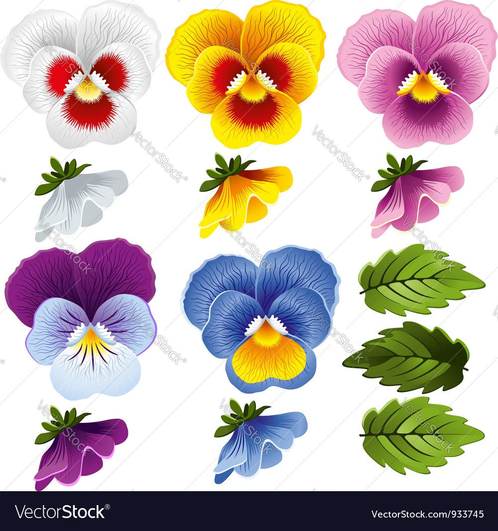 Pansy Set Of Different Flowers And Leaves Download A Free Preview Or High Quality Adobe Illustrator Ai Eps Pdf A In 2020 Pansies Flowers Flower Painting Pansies Art