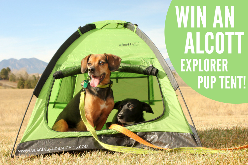 Top 5 Camping Essentials for Dogs {Stocking Stuffer ...