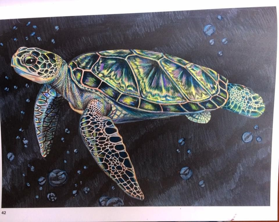 Coloring Pages Pond Animals : Sea turtle by julie white intricate ink: animals in detail