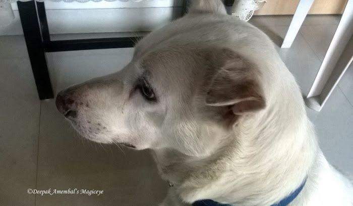 Pets forever: Sad again :(