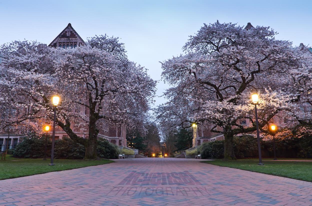 Pin Oleh University Of Washington Di Tour Uwcampus Perjalanan