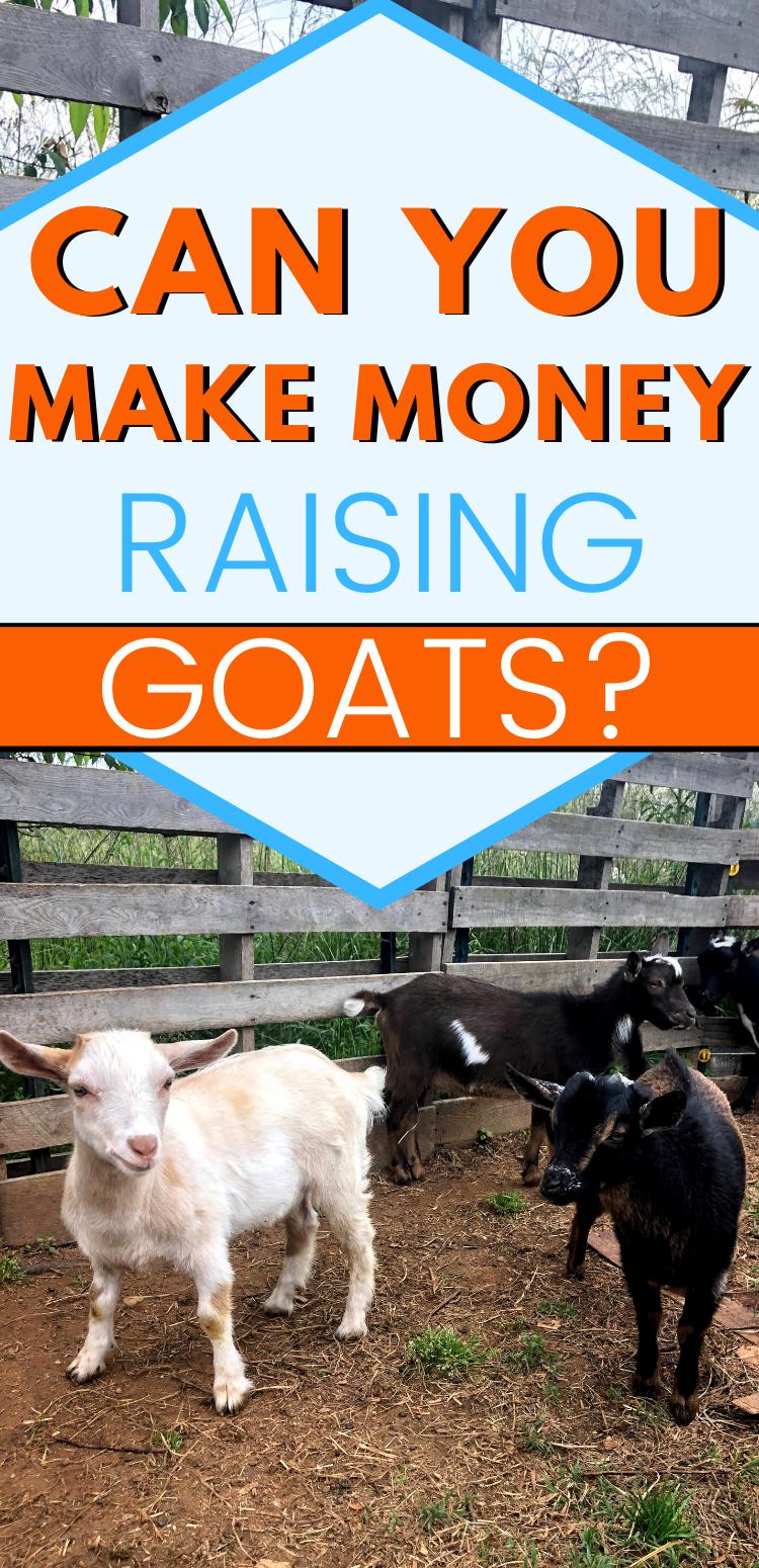 Can You Make Money Raising Goats? - Mranimal Farm in 2020 ...