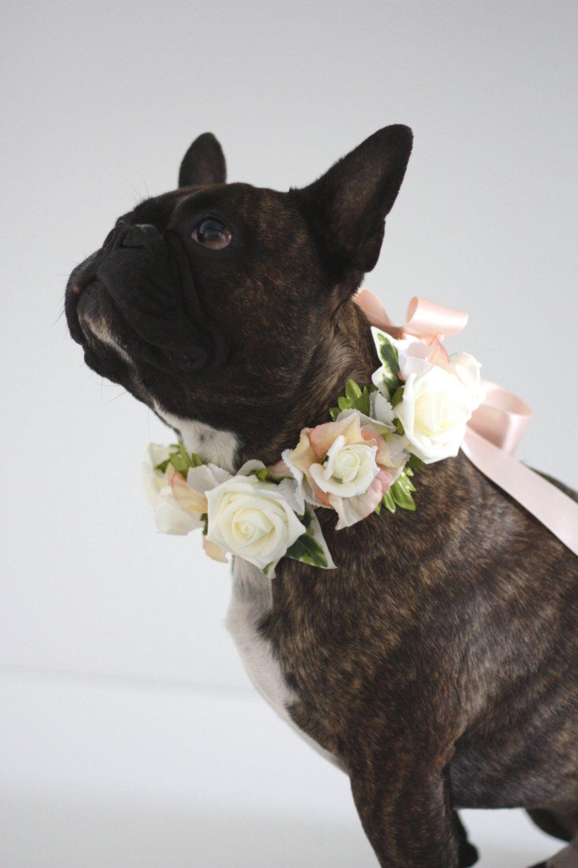 Flower Dog Collar For Weddings Peaches Cream Design Peach